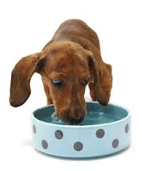 is your dog or cat drinking enough water scottsdale dog