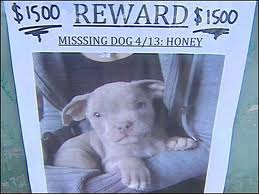 dog treat recall scottsdale dog walker